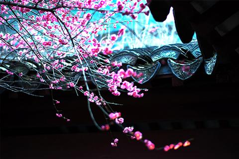 梨花院落溶溶月,杨柳池塘淡淡风 别墅中式庭院隐退之美