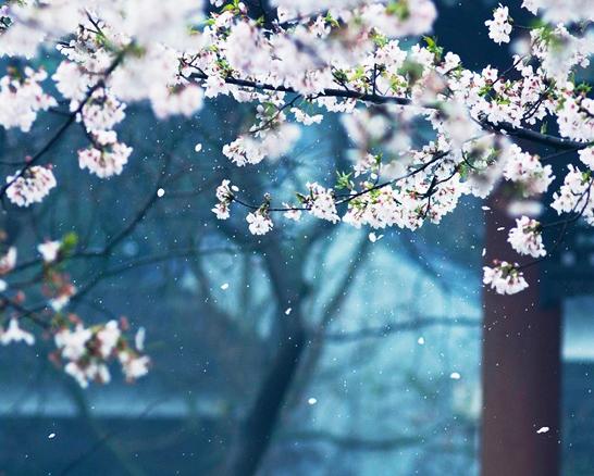 草木蒙笼,云气霞蔚  中式传统园林庭院的诗意之美