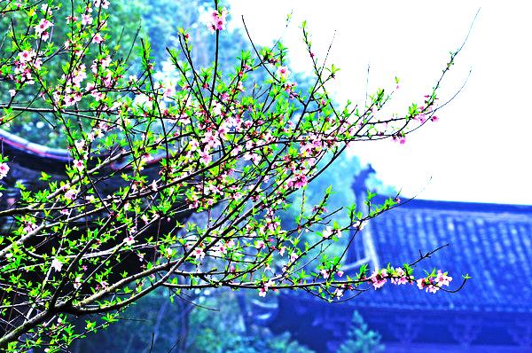 传承千年人居文化  中式古典庭院的深远魅力