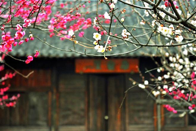 绿竹含新粉,红莲落故衣 中式古典庭院的绝美之境