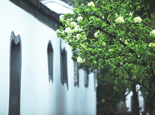 中式别墅庭院一袭粉墙黛瓦的简淡灵秀之美