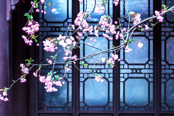 中式园林江南小景  烟雨清影墨韵萦,幽深玄远花香浓
