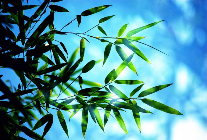 窗竹影摇书案上,野泉声入砚池中 中式书房庭院之竹境