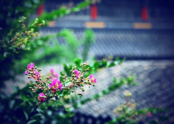 中式园林庭院构景之美  绿垂风折笋,红绽雨肥梅