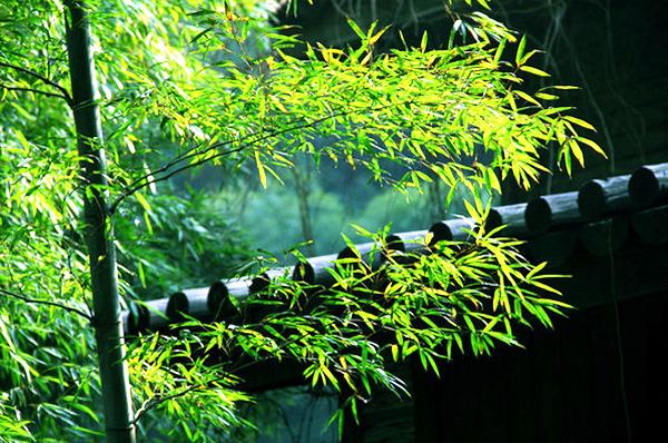 中式古典园林庭院景观之竹韵深深意境悠远
