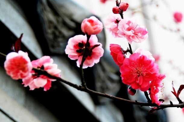 中式风格园林庭院梅兰竹菊之景雅意无穷