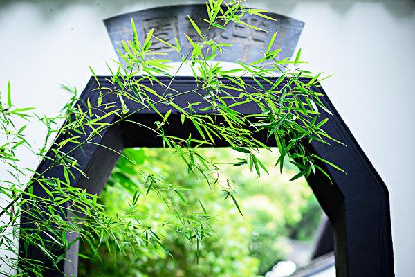 中式古典园林庭院|竹径通幽,竹影画意 (一)