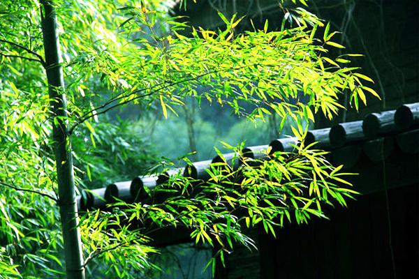 中式古典园林庭院|竹径通幽,竹影画意 (二)