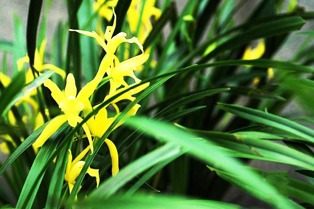 兰花中式盆景装饰——疏放潇洒,飘逸灵秀
