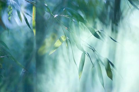 禅是虔诚的感恩,是豁达的觉悟
